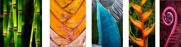 Tropical Leaves collage 1