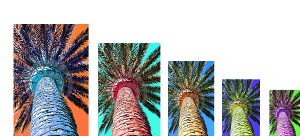 Tropical Palm tree collage 1